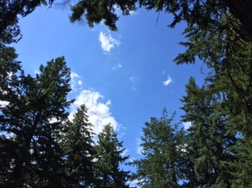 At the summit of Mount Tabor, the sky seems bluer above these fir treetops.