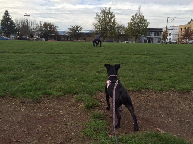 Charlotte looks longingly at the grassy field where she's become a regular visitor.